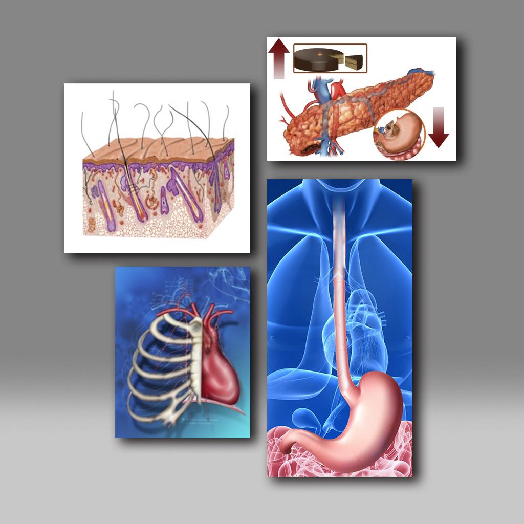 Anatómicas